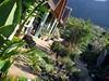 Kirstenbosch Nursery
