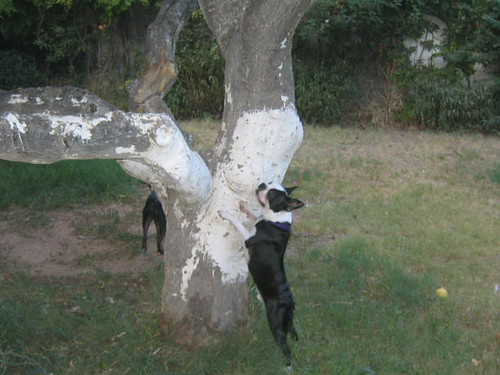 after a month of living here, they just discovered the lizards in the tree