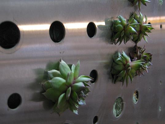 paul kephart, rana creek, green meme, living wall, green roof, paul kephart, freya bardell