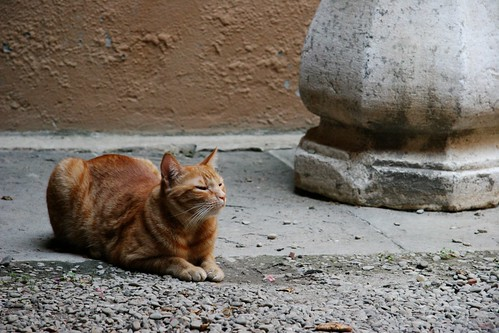 His majesty the cat of Bologna