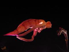Flying aquatic beasts