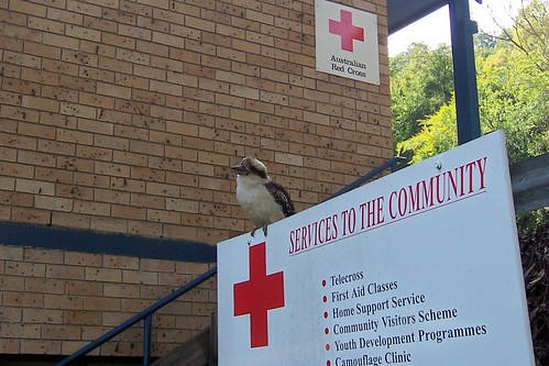 Kookaburra at Henry Wheeler Place Gosford