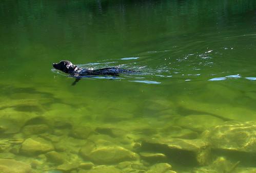 Silent swimmer