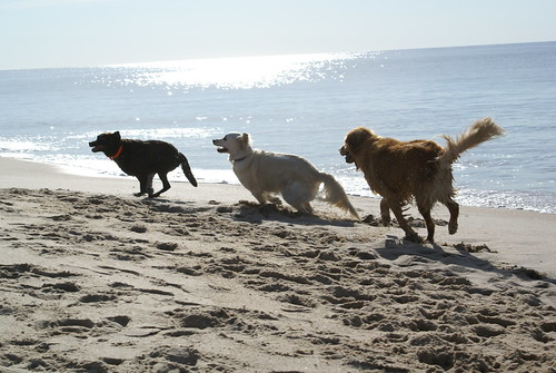 Coco, Frisket & Max, Indian Wells Beach, Amagansett NY (August 13, 2006)