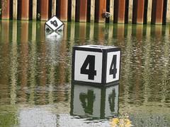 schwimmende vier