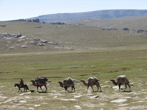 Camel train between Balguntay and Narat, western China / ラクダの列- バルグンタイ町とナラット町の間(中国)