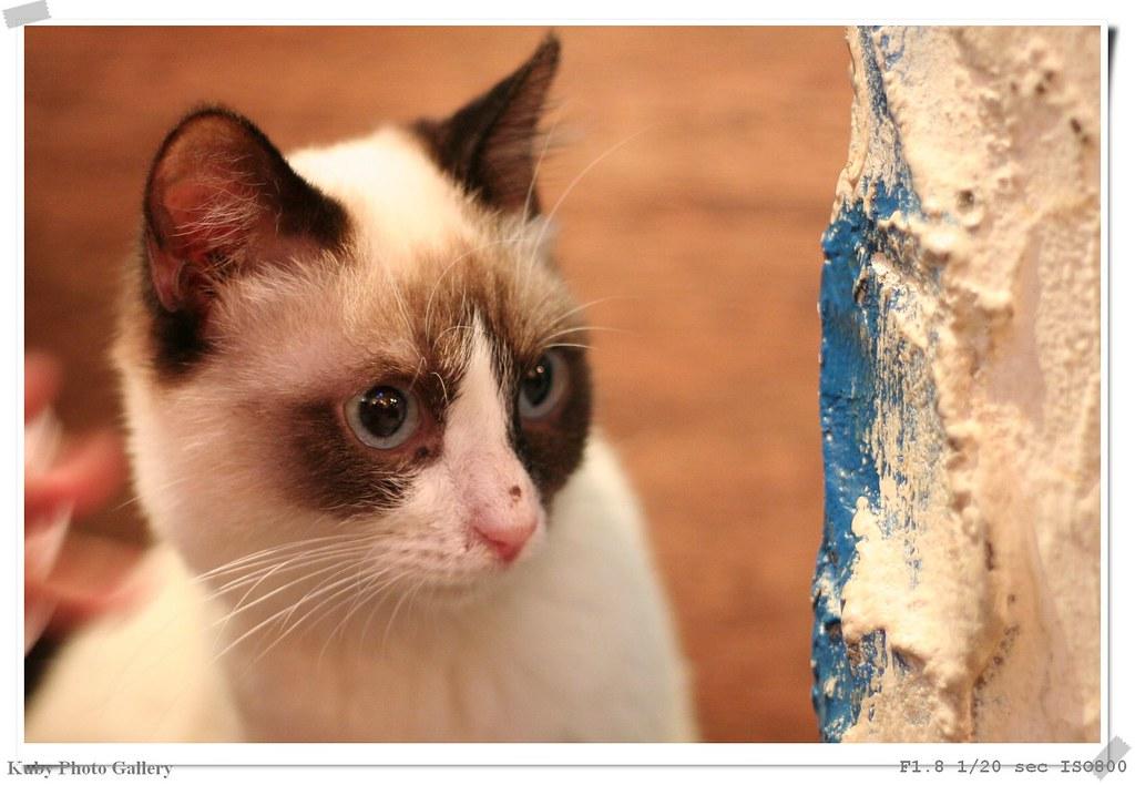 永和貓鋪茶坊寵物餐廳