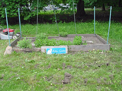 Molly's garden before