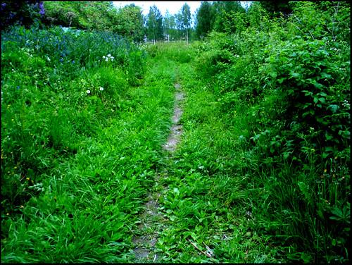 green skinnskatteberg