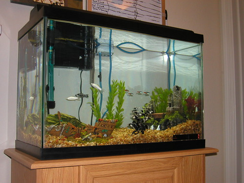 Our Fishtank
