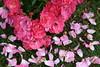シリーズ「赤」-散りゆく花々-