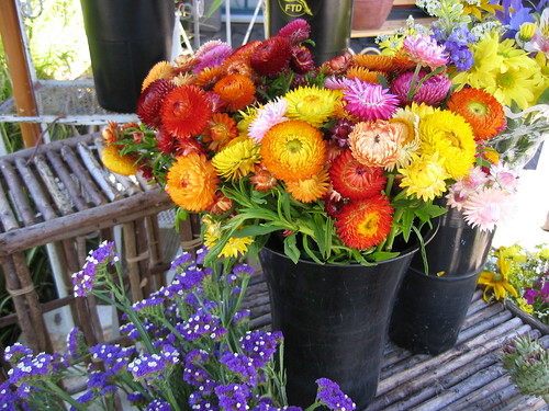 flower market in san francisco