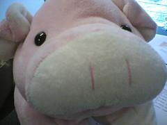 hello~ i'm pork chop