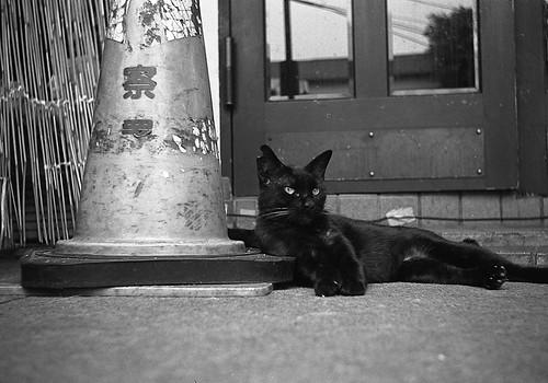 パイロンと耳欠け黒猫