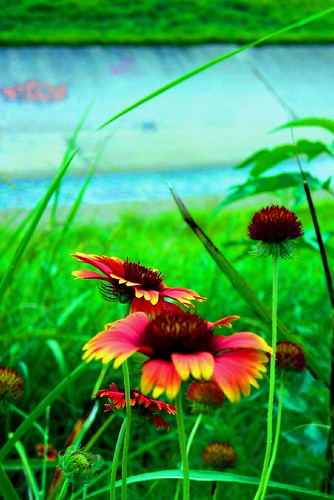 Oversaturated Wildflowers