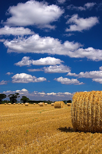 IMAGE: http://static.flickr.com/64/199923762_d4706701ab.jpg