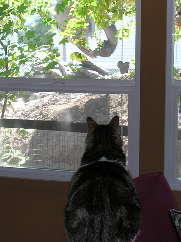 Esther, watching the backhoe at work