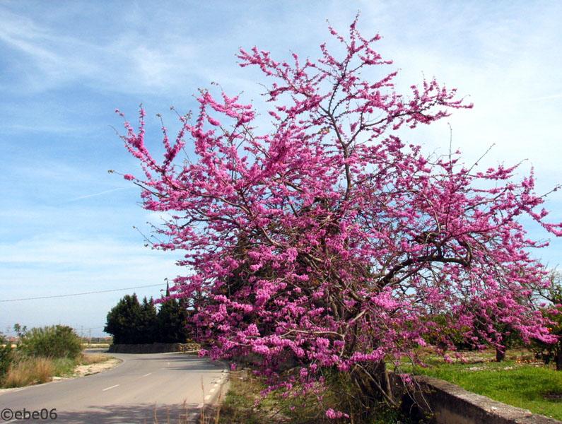 El árbol rosa