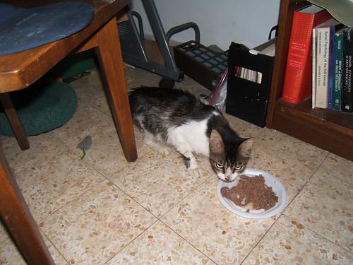 Mitzi enjoying her little food