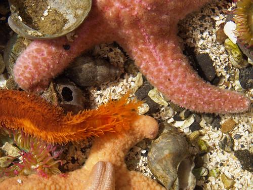 A starfish leads a dance
