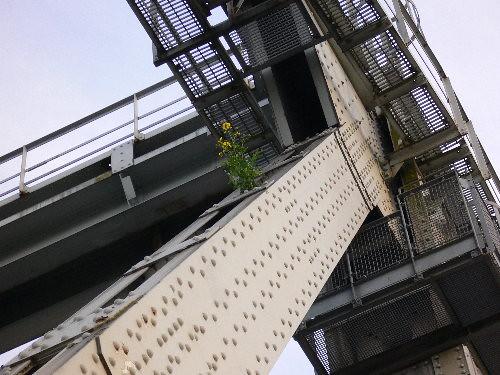 1blomst på bro