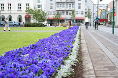 Pansy Town!