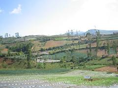 Pemandangan Desa Sarimukti