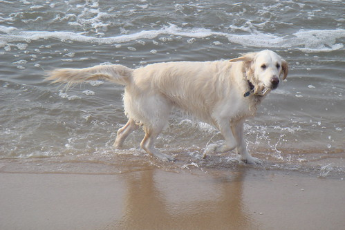 Frisket for a swim