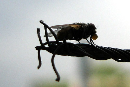 A fly - ఈగ