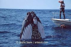 Baleia com 2 fotógrafos