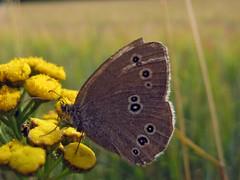 Yellow Ladybug :)