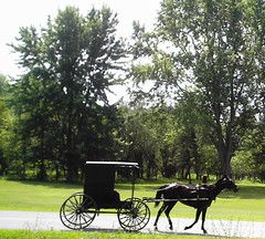 Amish Buggy Heading From Randall, NY To Currytown.