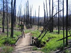 fisher creek trail7