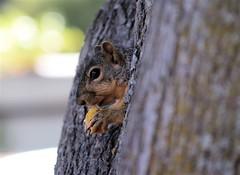 squirrel4