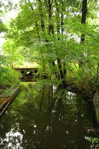 der Teich nebenan