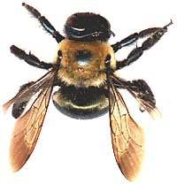 fucking bee