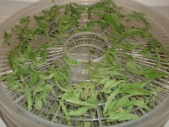 Dried Lemon Verbena