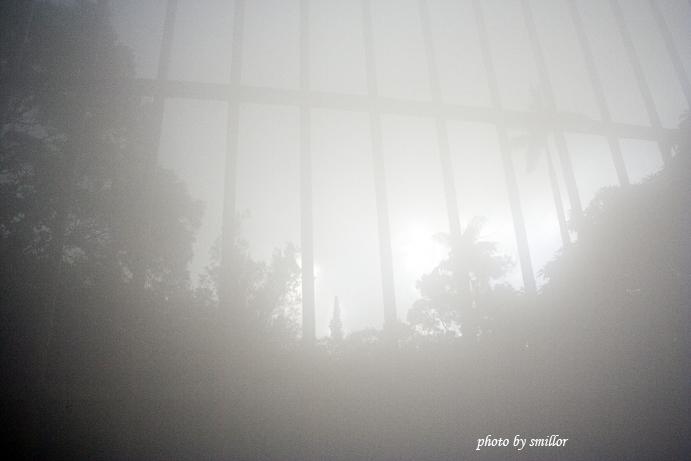 鏡頭霧濛濛的仙人掌溫室外窗景