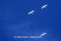 Livre para voar