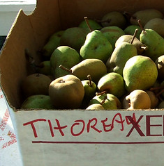 economics pear Fresh apples, grapes, and pears: world markets and trade  past reports ( usda economics, statistics and market information system).