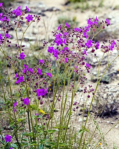 Mexican Wild Flowers