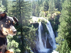 Rex Takes in Burney Falls