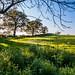 Spring afternoon walk Malvern Hills