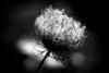 48196528236_b187e0ceae_t