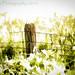 Green Pastures #2 (HFF)(HSS)