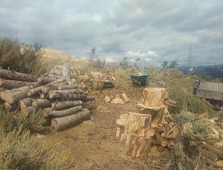 Firewood begins