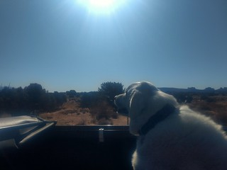 Truck ride for Mavis in moab