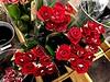 49075557796_43e48feaee_t