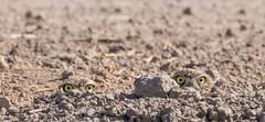 The dirt has eyes