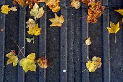 Leaves  (Explore 06/12/19)